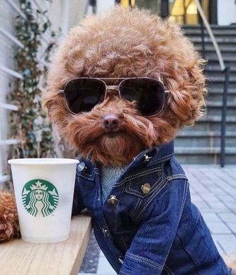 starbucks dog