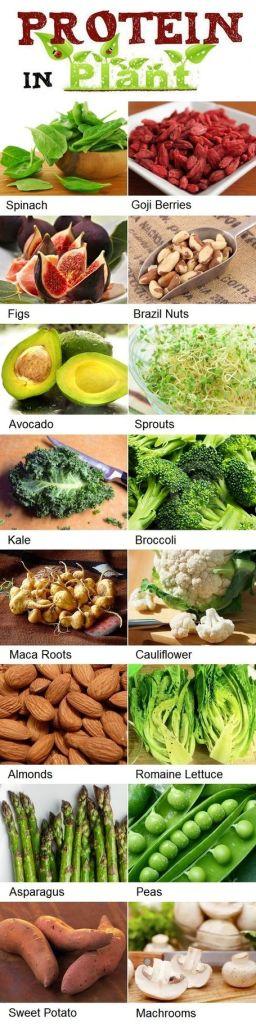 protein list